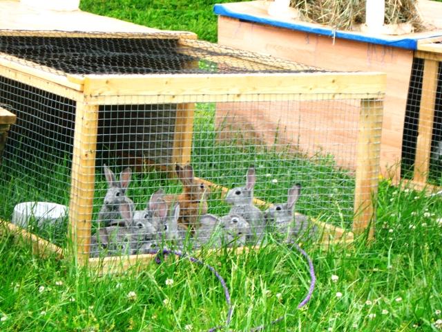 Фото ферма для кроликов