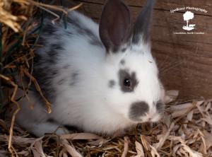 Baby Bunny 2015