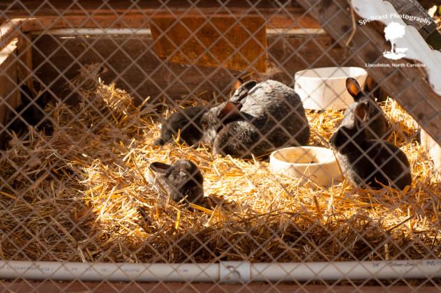 Bunnies2-5-2