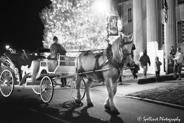 carriage-horse-bw