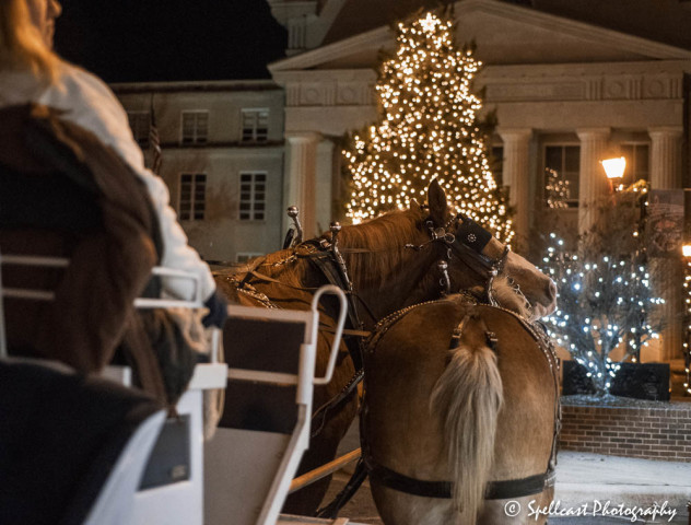 carriage-horses